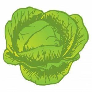 Lechuga - Verduras de verano