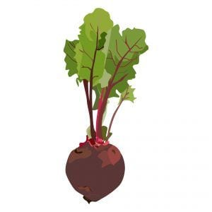 Remolacha - Verduras de verano