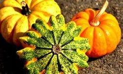 Productos de otoño