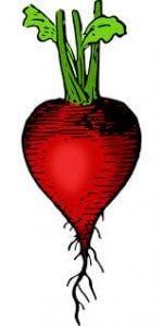 Rabanito - verduras de verano