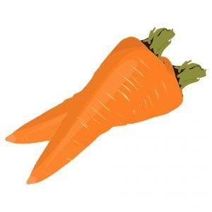 zanahoria - Verduras de verano