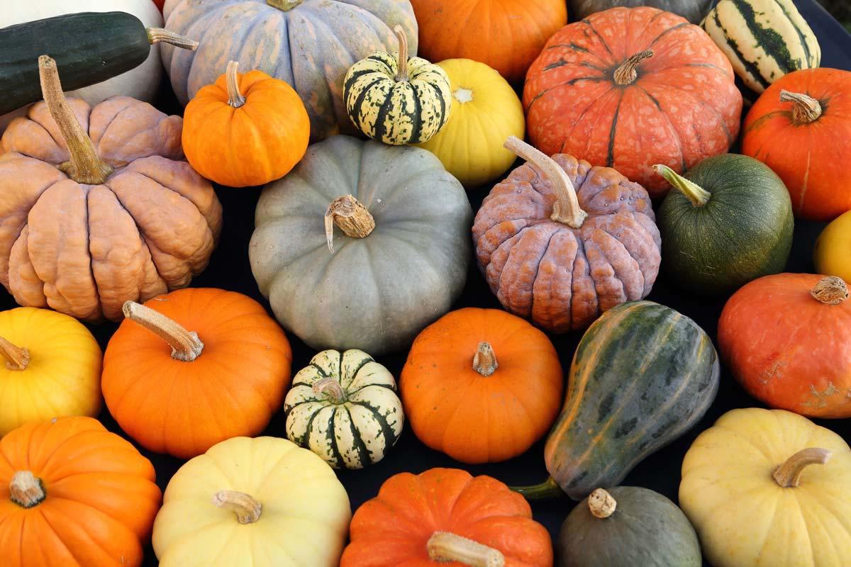 Calazas en halloween - Tipos de calabaza