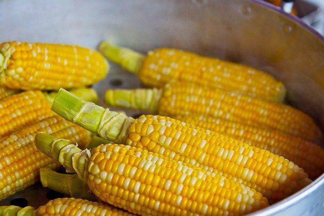 Productos septiembre - Maiz